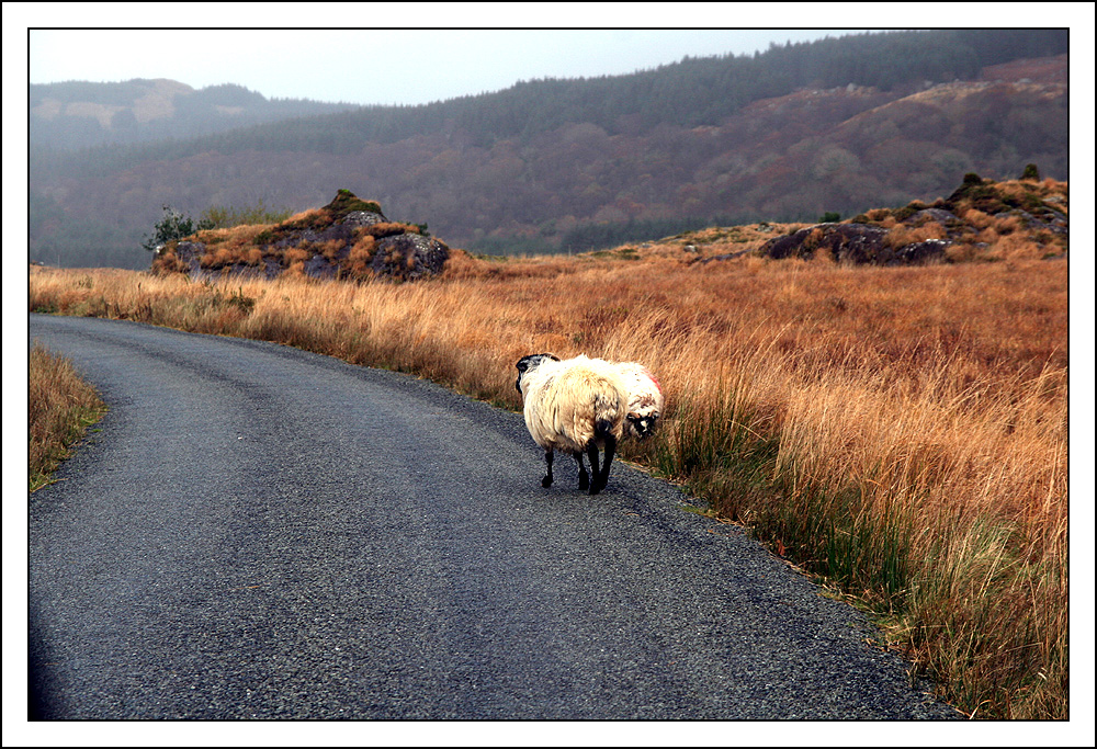Fahrt durch das Black Valley II....
