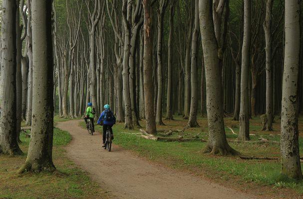 Fahrt durch den Gespensterwald