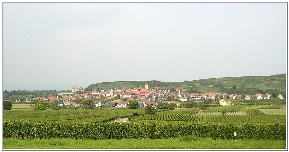 Fahrt nach Burkheim am Kaiserstuhl