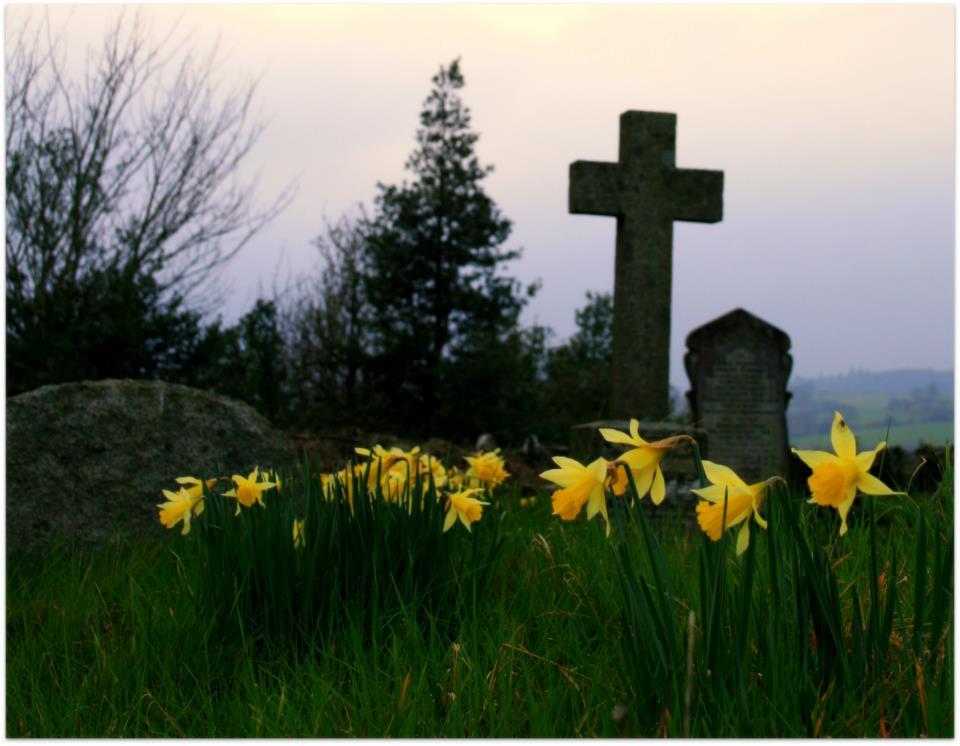 Fair Daffodils, we weep to seeyou haste away so soon