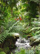 Fairchild Botanical garden