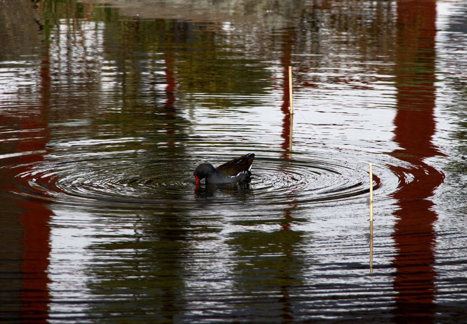 Faire des ronds dans l'eau ...