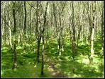 Fairy Forest - Glendalough - Co. Wicklow - Ireland