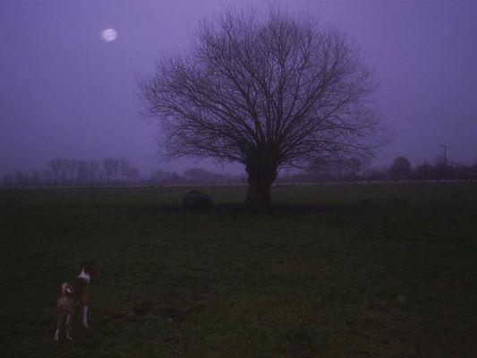 Fake moon...