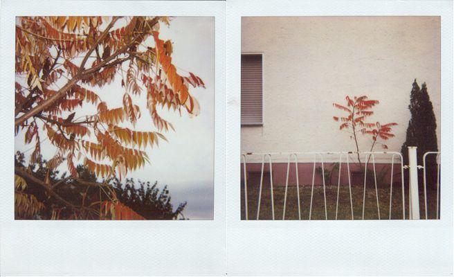 fall 1&2