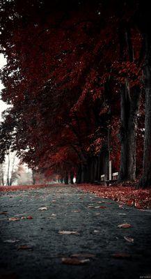 Fall .3 (høsten veg)