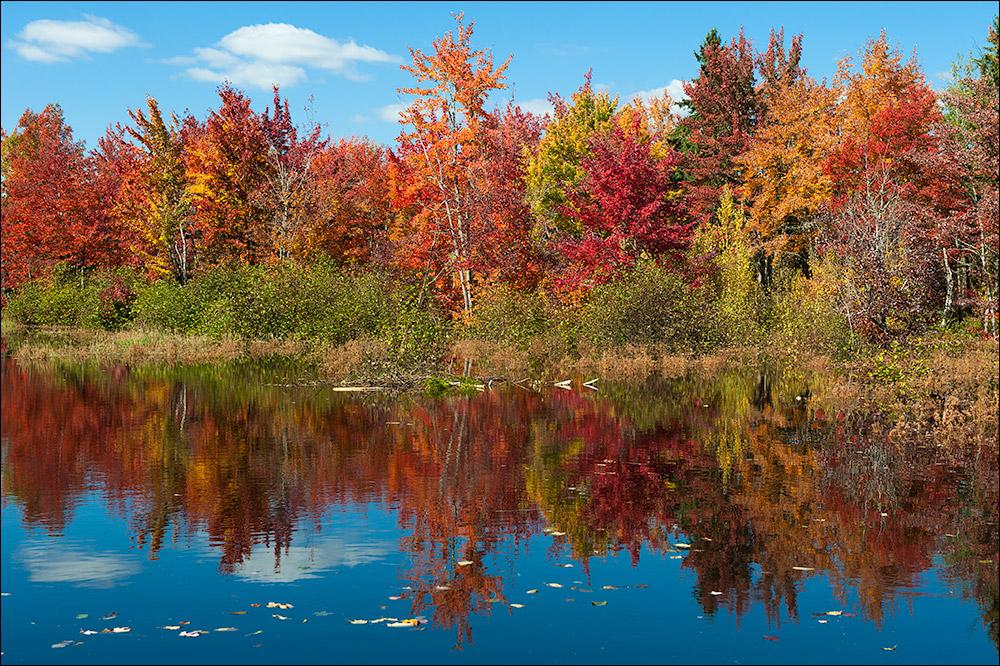 [ Fall Colours ]