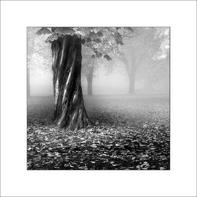 Fall Fog v2