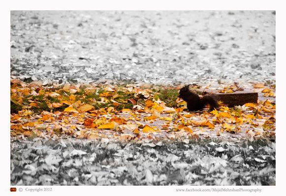 Fall in my nigbourhood