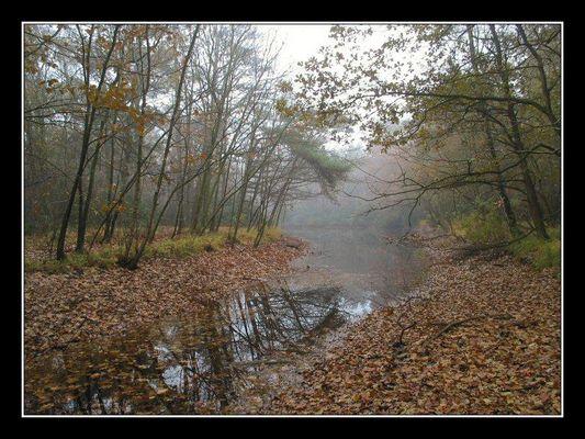 Fall, Landgoed Hondsdonk, 2003 # 10