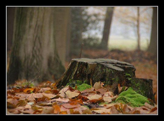 Fall, Landgoed Hondsdonk, 2003 # 6