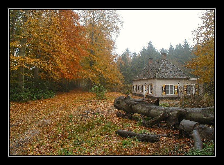 Fall, Landgoed Hondsdonk, 2003 # 8