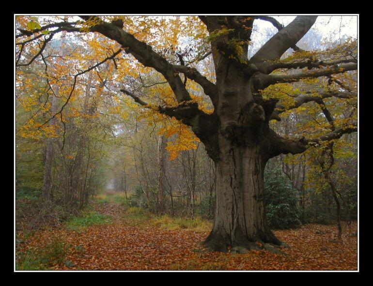 Fall, Landgoed Hondsdonk, 2003 # 9