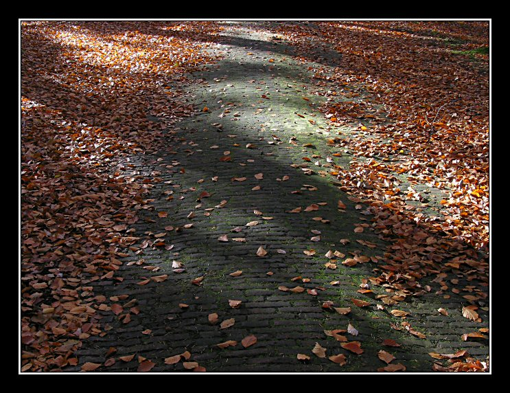 Fall, Landgoed Valkenberg, 2003 # 11