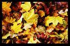 fall08