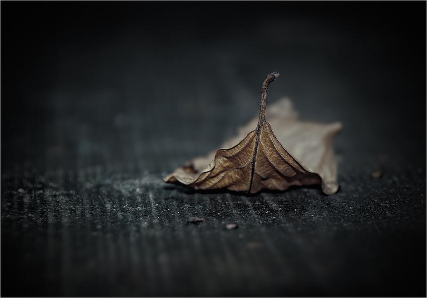 """""""fallen leaf"""""""