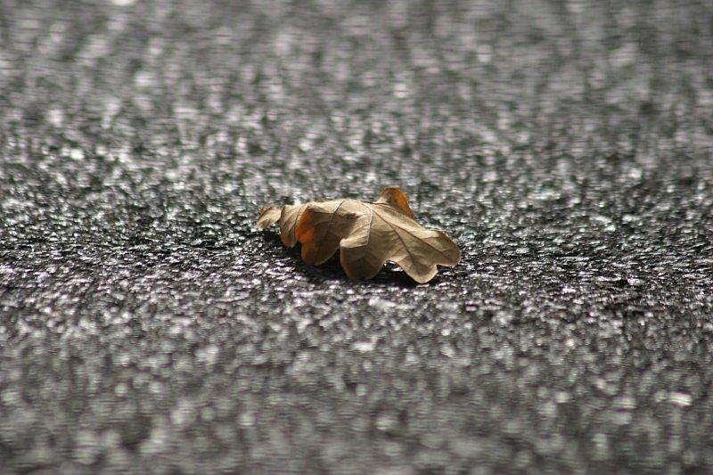 - fallen leaf -