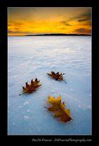 Fallen Seasons