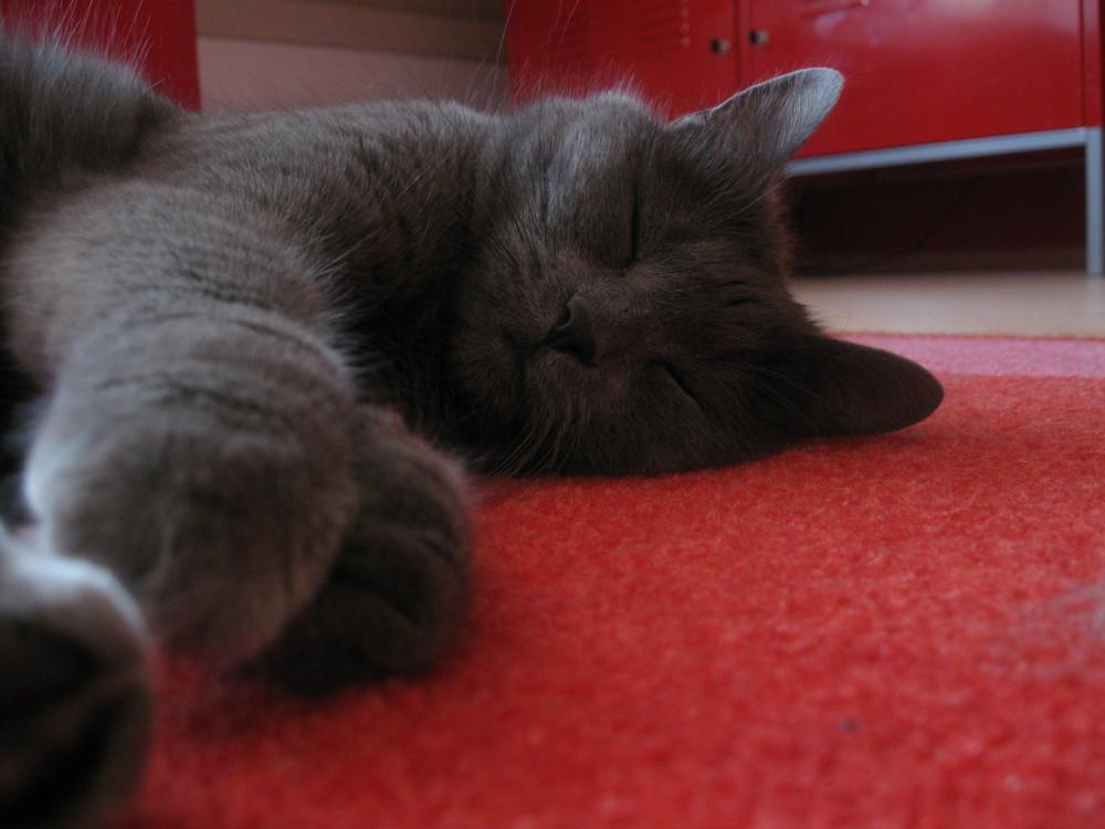 *Falling asleep*