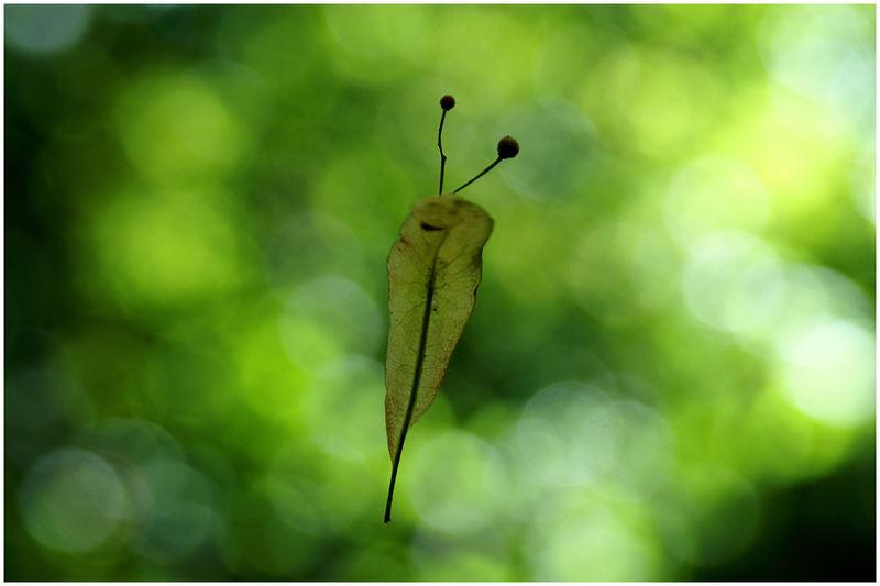 Falling Leaf..
