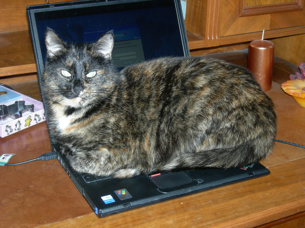 Falls es mal mit dem Laptop nicht klappt