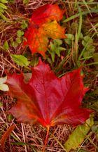 falls leaves