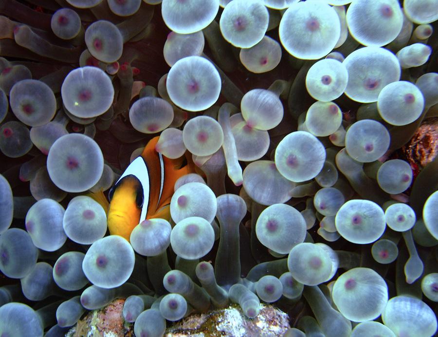 """Falscher """"Nemo"""""""
