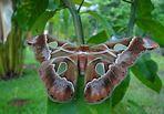 Falter, Motte oder Schmetterling?