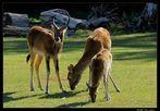 ...famiglia..al parco!..