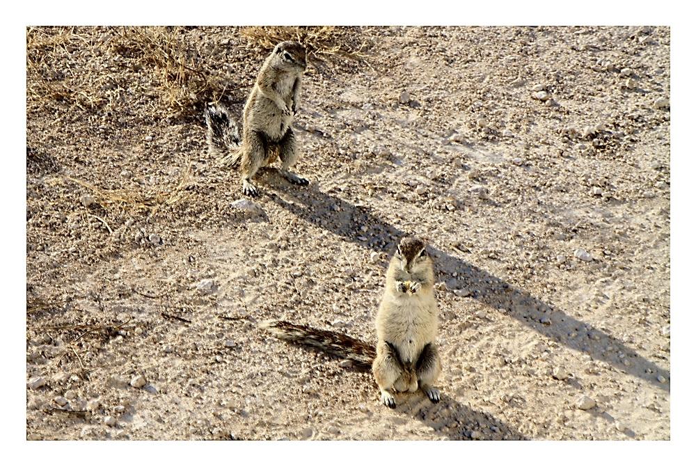 Familie Erdhörnchen