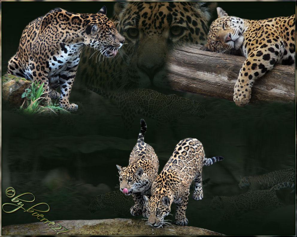 Familie Jaguar