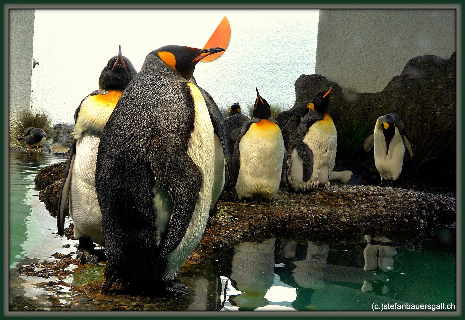 """""""Familie Pinguin."""""""