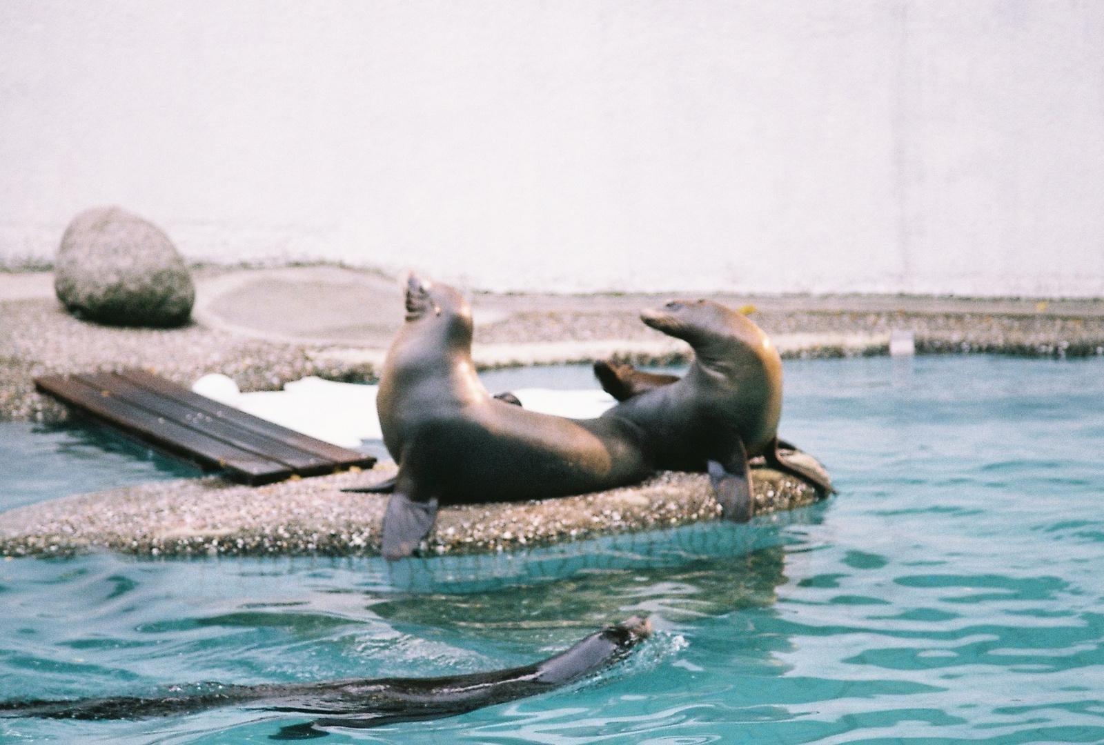 Familie Seehund