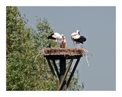 Familie Storch.....