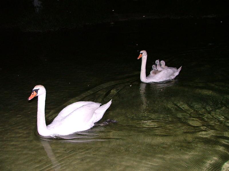 Familien-Nachtausflug