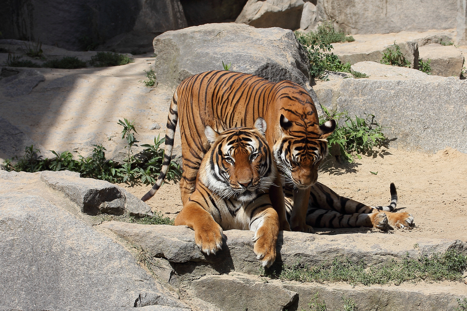 Familien-Sommertag bei den Tigern I