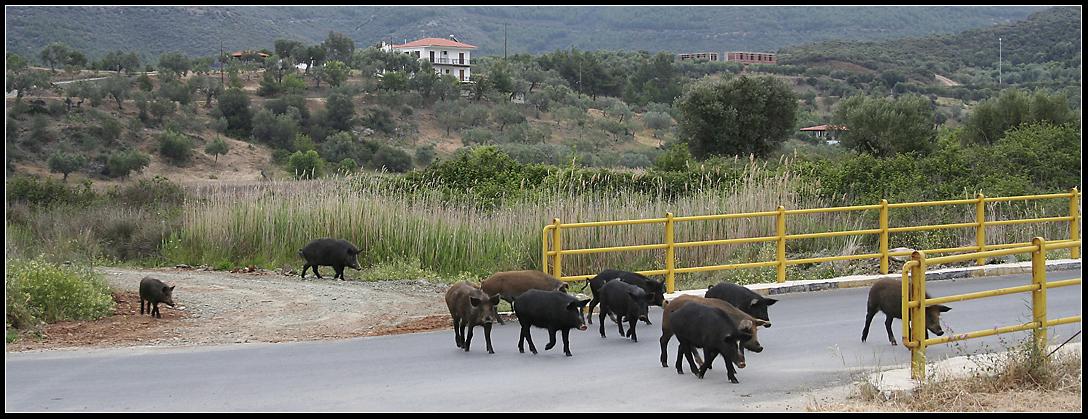 Familienausflug der Schweinebande
