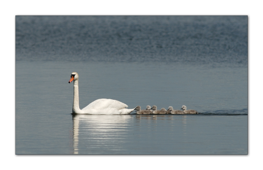 Familienausflug...(3)
