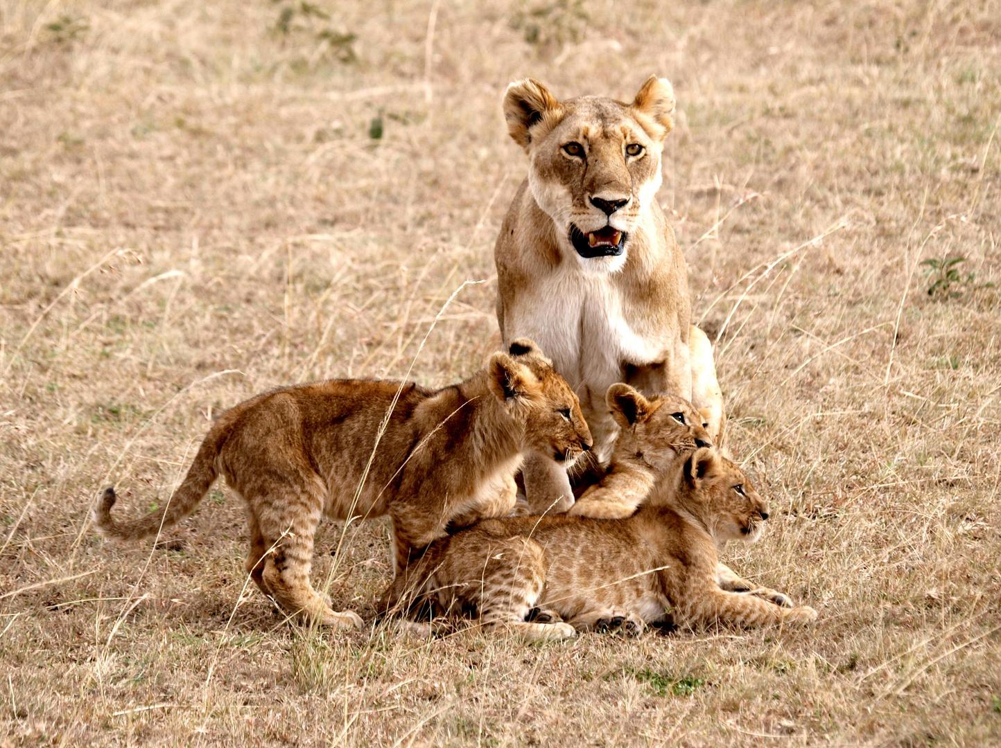 Familienfoto...