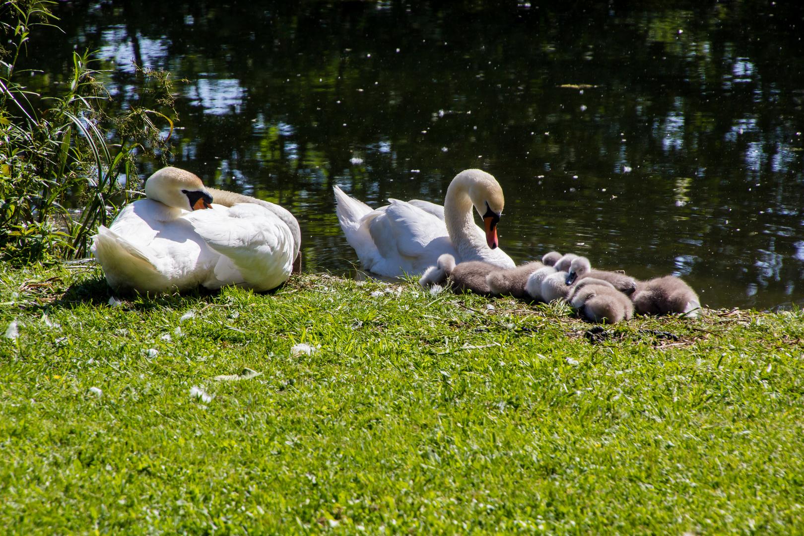 Familienidylle am Wasser