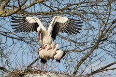 Familienplanung bei Familie Storch