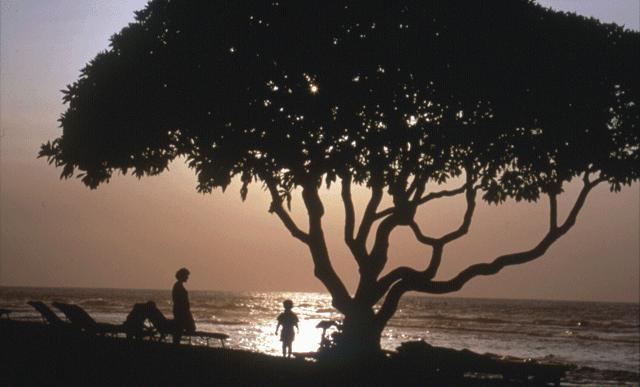 Familienstammbaum