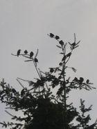 Familientreffen 3: Alle Vögel sind schon ...