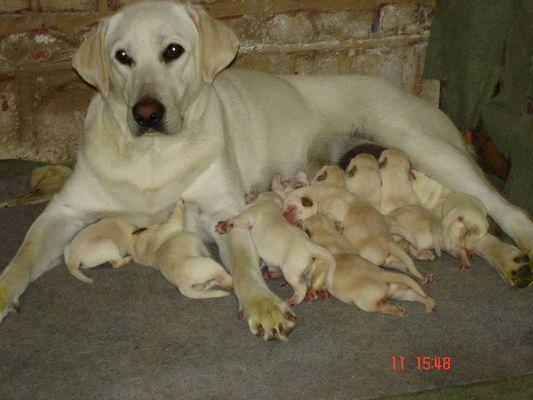 Famille nombreuse.
