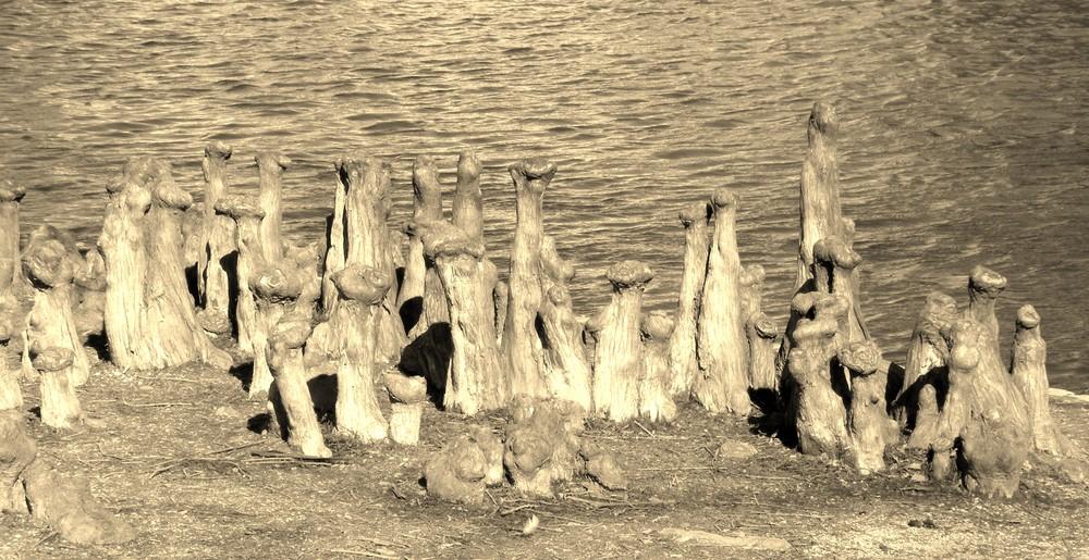 famille racine au bord de l'eau