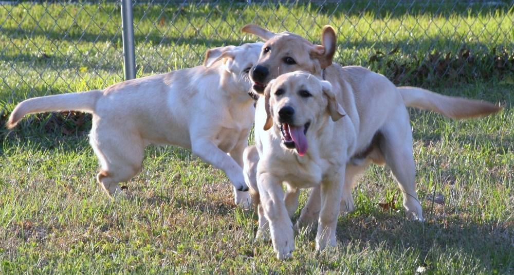 Family Fetch