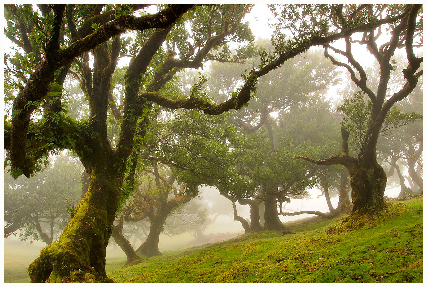 Fanal im Nebel III