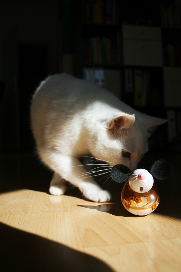 Fang die Maus :)