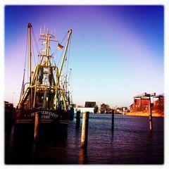 Fang Frisch Fisch... Sonne Heute aber kalt... aber Sonne!!!!!!!!!!!