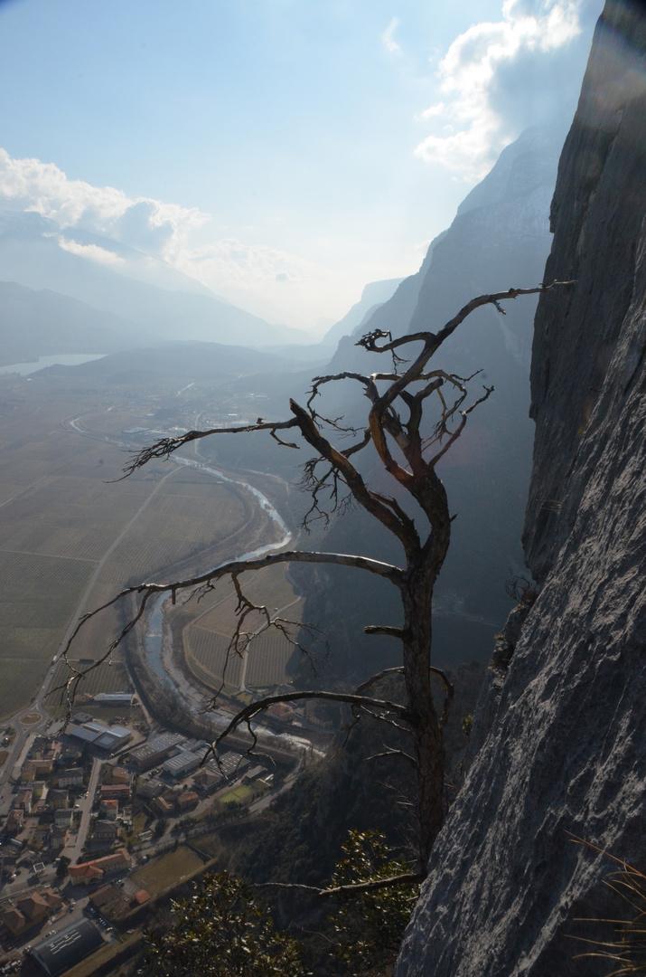 Fangarme in der Felswand :)
